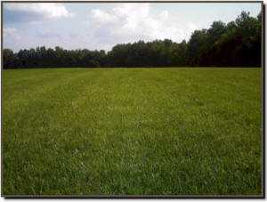 Field of Fescue grass - we can meet your needs -  as much or as little!